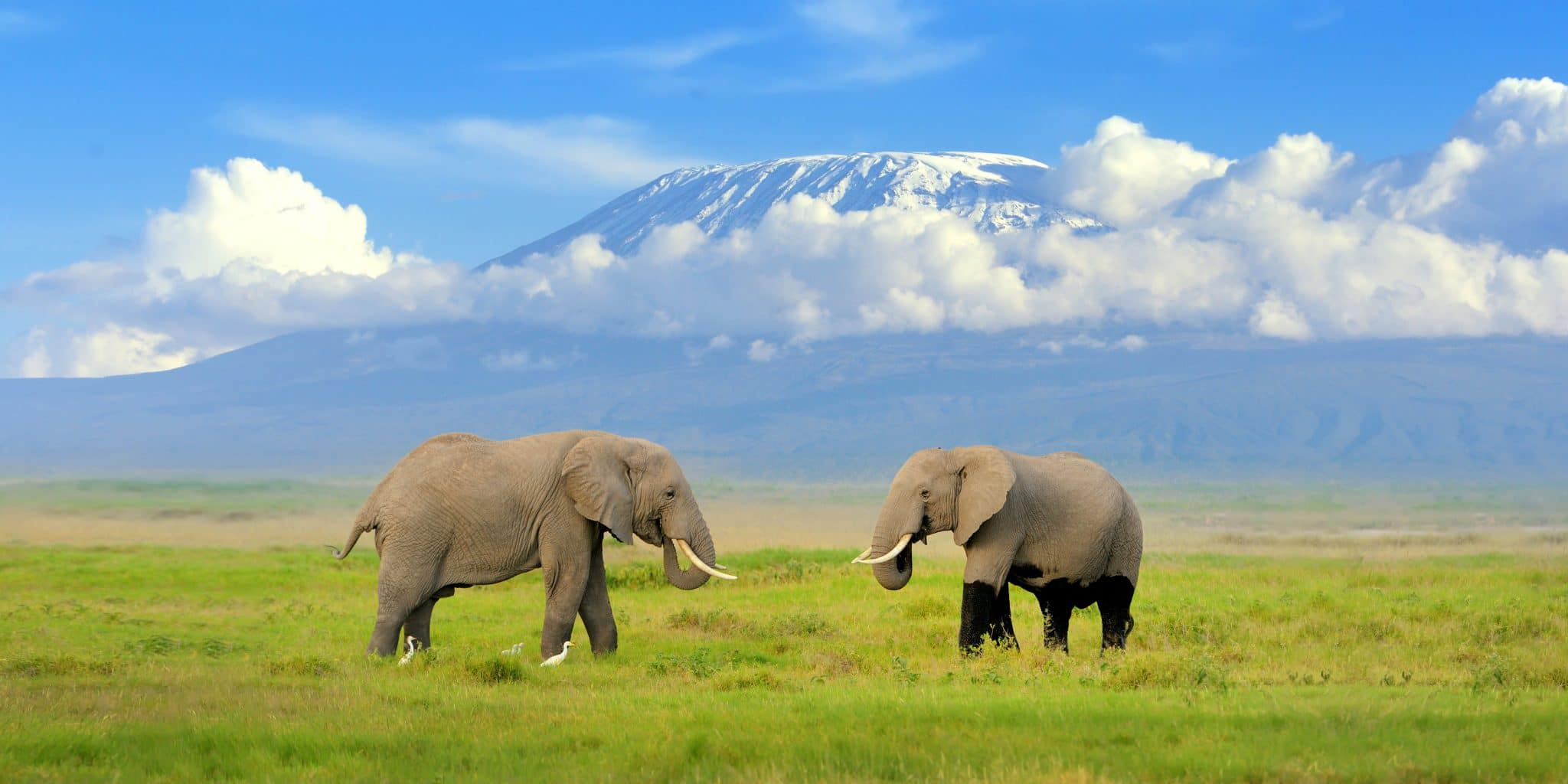 Elephants at Amboseli National Park with Mt. Kilimanjaro in background