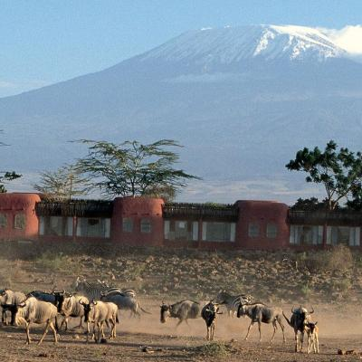 Wildebeest and zebra at Amboseli Serena Safari Lodge with Mt. Kilimanjaro in background