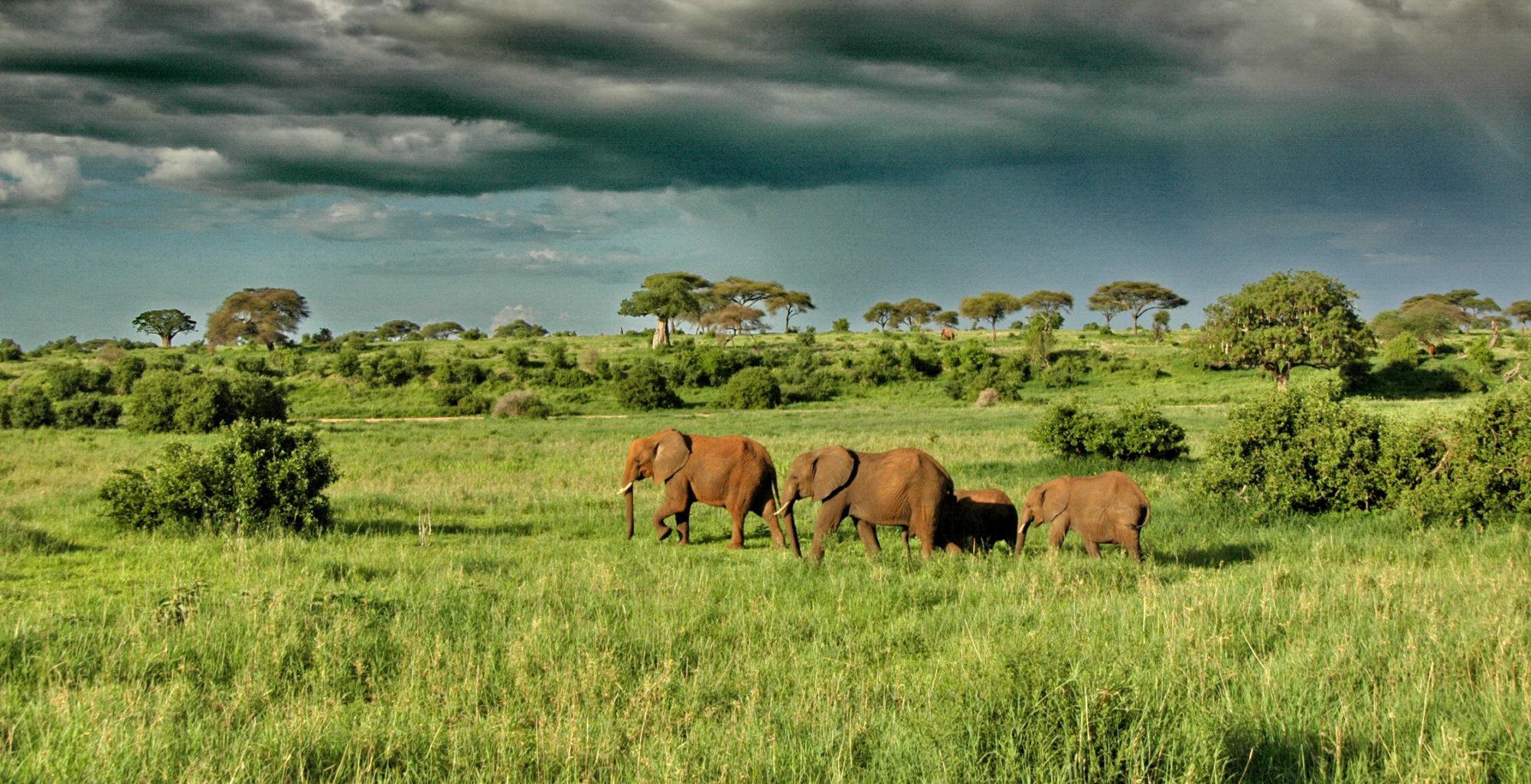 Elephants at Tarangire National Park