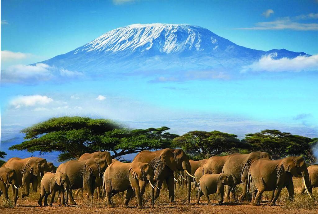 A herd of elephants in Amboseli National Park