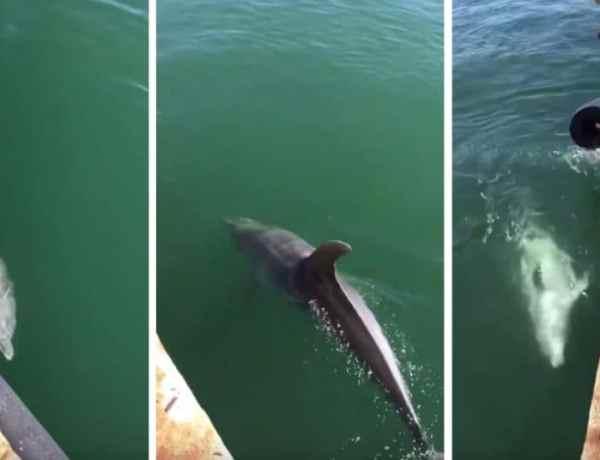 Confinement : Les dauphins sont de retour dans les ports de Sardaigne