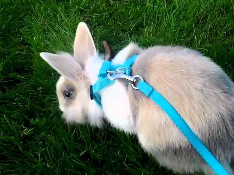 Un couple promène un lapin en laisse et écope d'une lourde amende