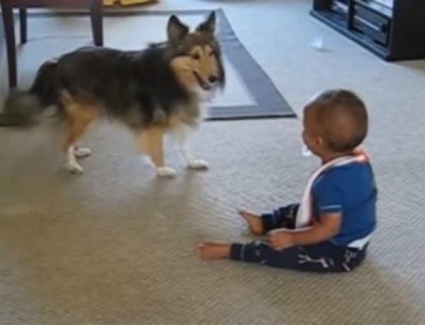 Cute : Bébé a un fou rire en voyant son chien qui danse