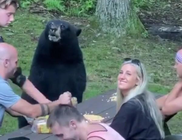 Un ours s'invite à la table d'une famille lors d'un pique-nique