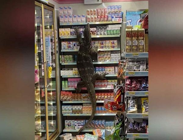 Panique en Thaïlande : Un varan s'invite dans un supermarché !