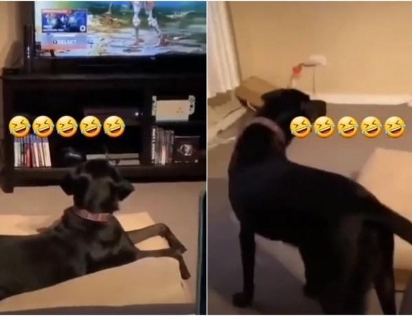 Effrayé par un personnage de jeu vidéo, ce chien prend la fuite !