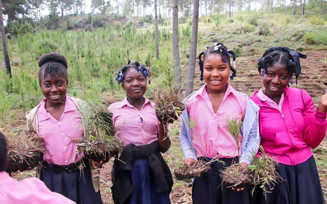 Nya träd planterade i Haiti