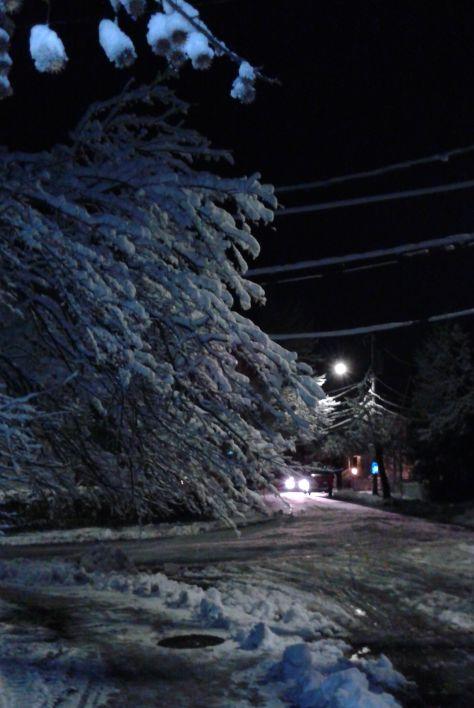 2016-02-05_eerie snow on trees_sm