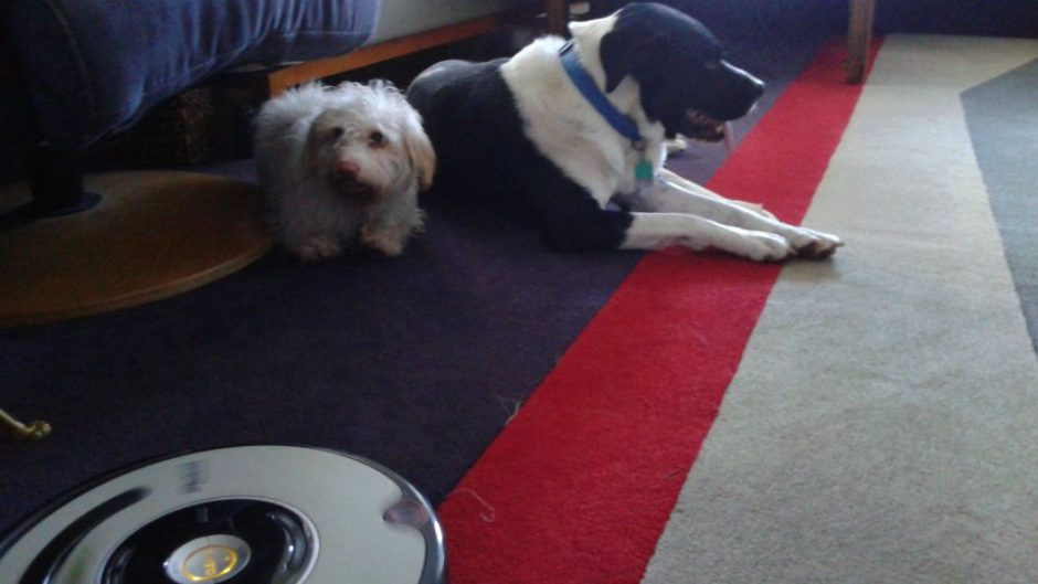 MacDuff, Jack, and a Roomba