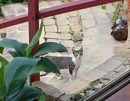 Cat visitor up close