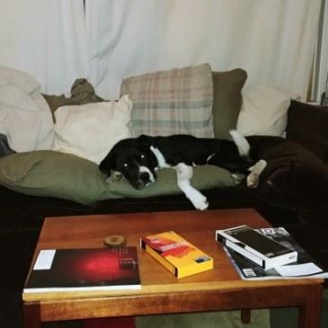 No dogs on sofa, Jack!