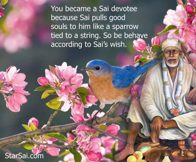 Sai devotee