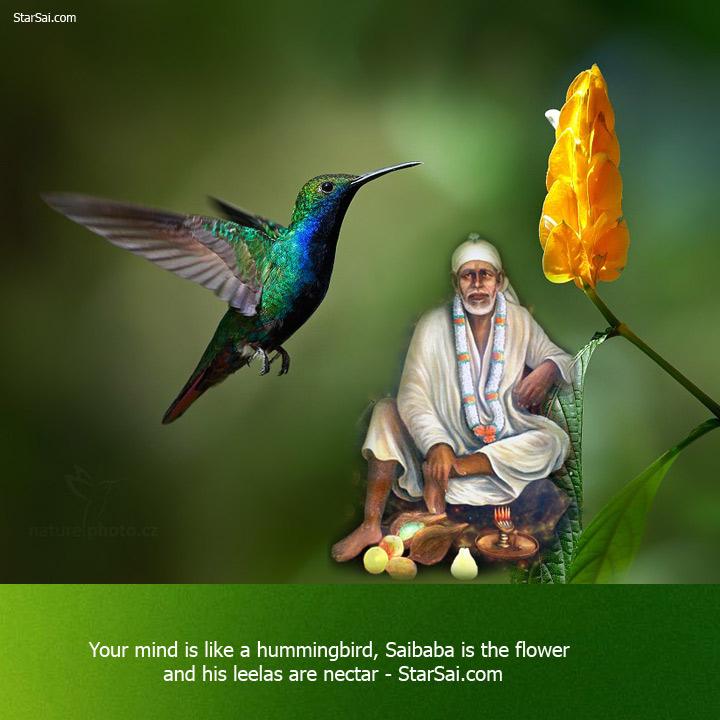 shirdi saibaba flower