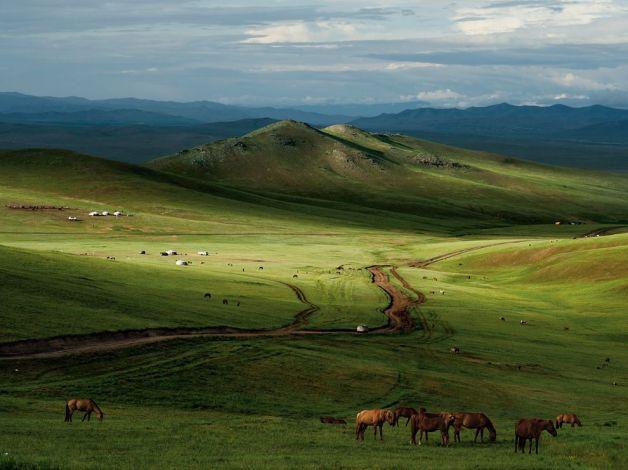 horses mongolia leong national-geographic