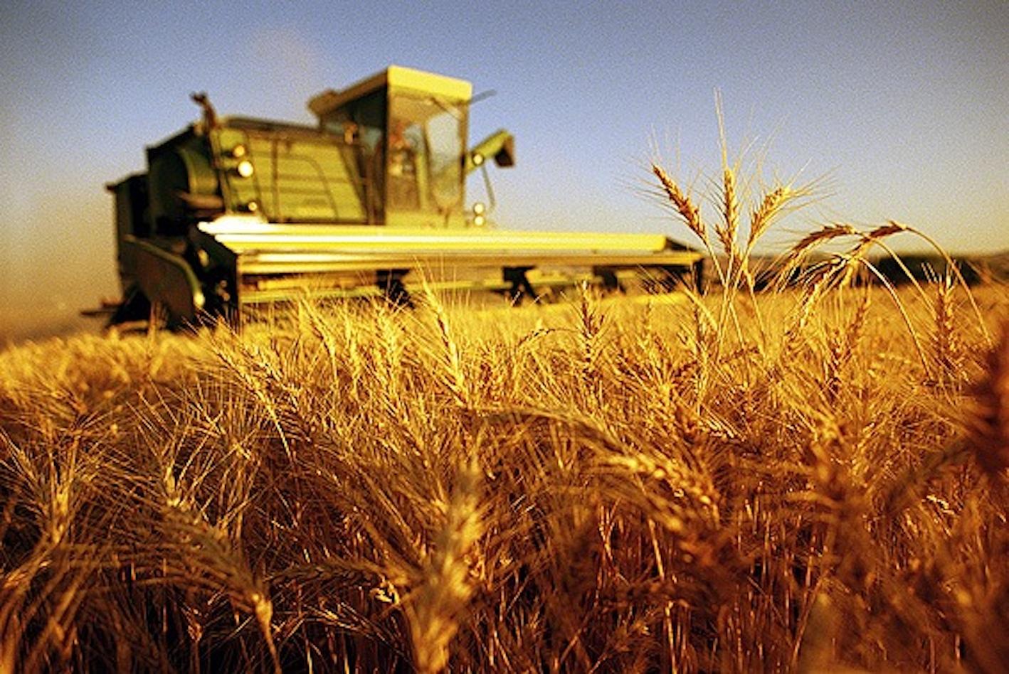 歐洲如何以及為何需要更多有機農業