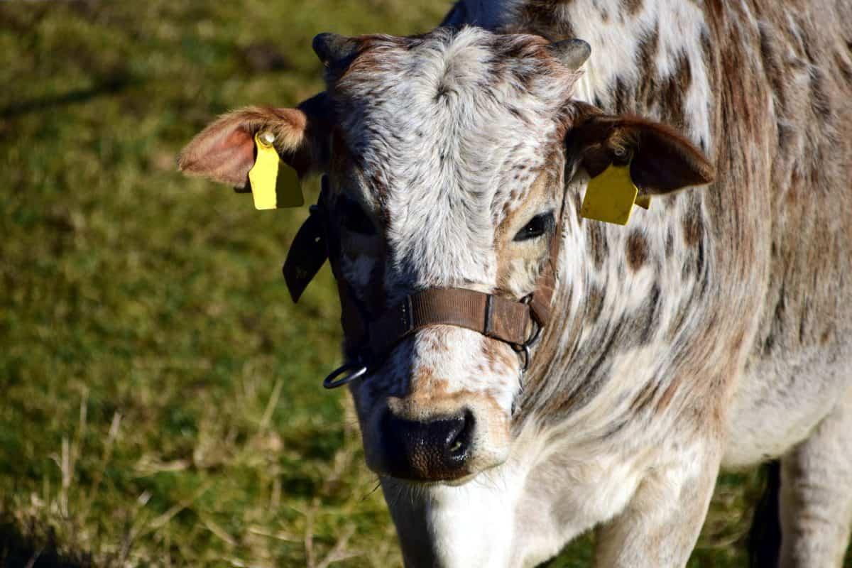 因為 27 人想通過遠離農業來減少抗生素的使用