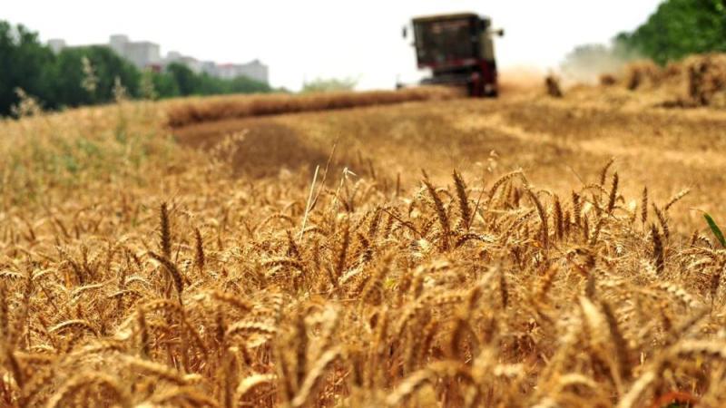 Потому что для макарон не будет пшеницы