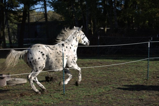 Spruch Geburtstag Pferd Vionastacycilia Web