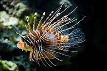 STNG fish