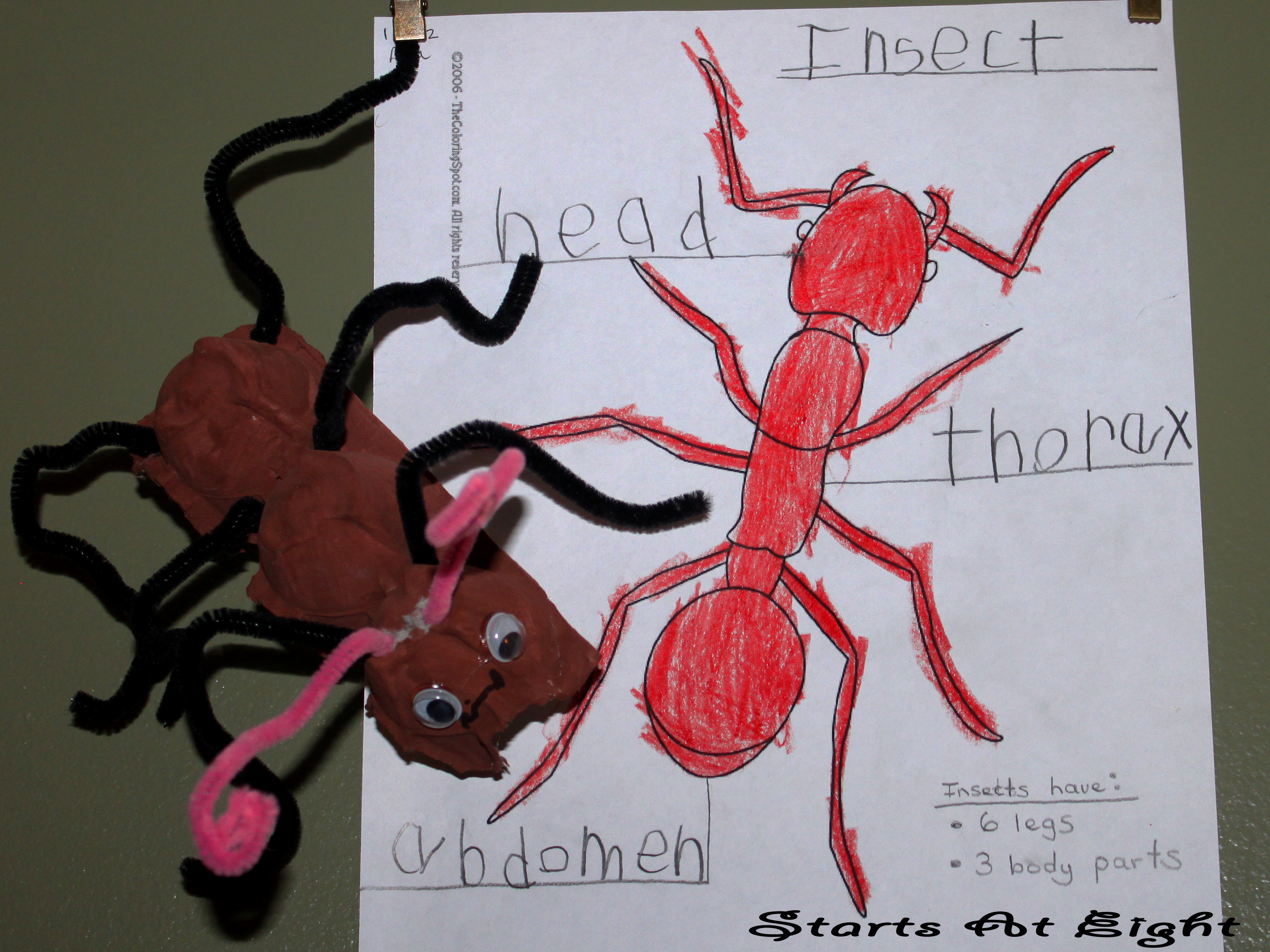 What Is An Insect
