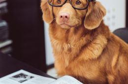 ginger dog wearing glasses reading book flexibility
