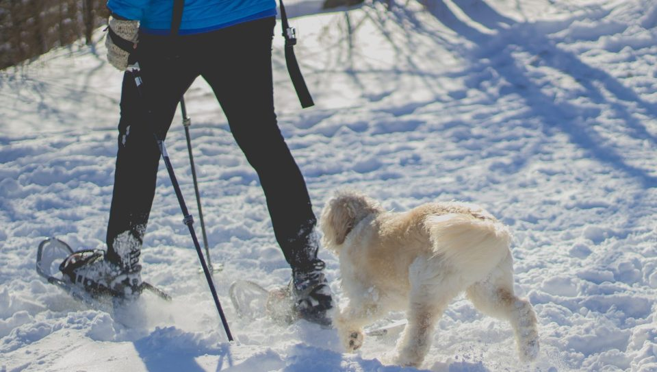 Stay-Active-Snowshoeing