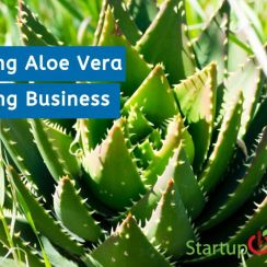 Starting Aloe Vera Farming Business