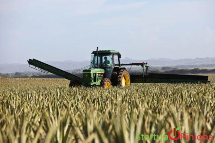 Starting Aloe Vera Farming Business
