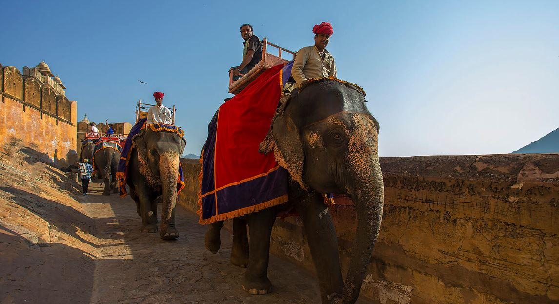Camel and Elephant rides near Amer fort