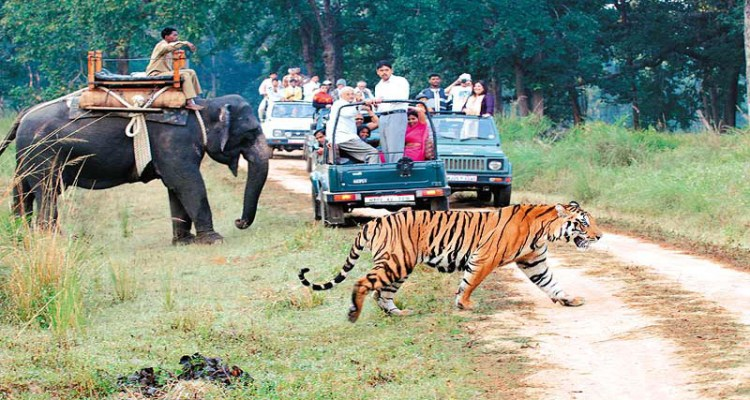 Jungle Safari tour package - North India