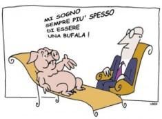 Suina-bufala-influenza A