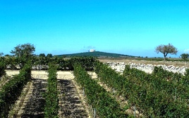 vitigni, immagine d'archivio