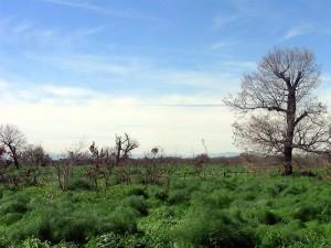 Area Parco Incoronata, Foggia (parks.it)