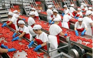 Stabilimenti pomodori Ar (corriereortofrutticolo.it)