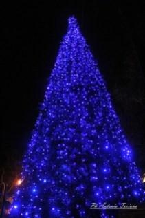 corteo albero manfredonia 01122017 (31)