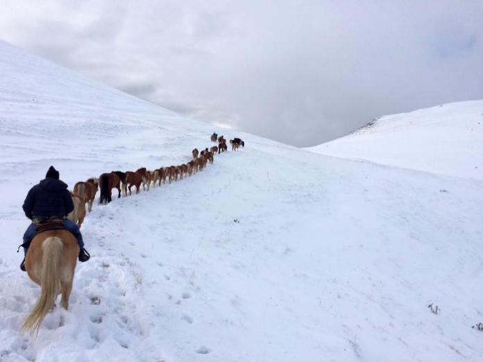 Un momento della transumanza da Castelluccio a Norcia di una trentina di cavalli durante una tempesta di neve e forte vento, 9 dicembre 2017. ANSA/ RIZZI