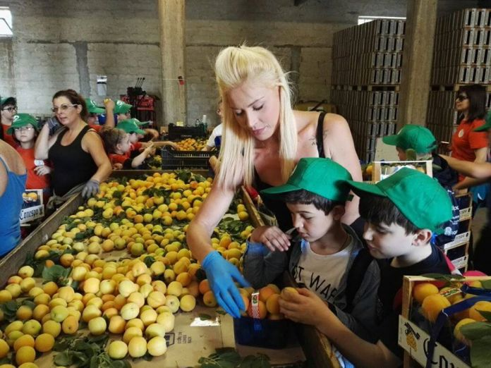 Aumentano ancora le imprese agricole in Puglia. Nell'ultimo trimestre sono cresciute di 392 unità: erano 76.585 al 31 marzo scorso e ora sono 76.977