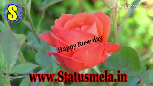 Happy rose day status video download