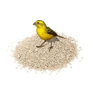 Άμμοι πτηνών