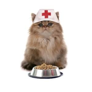 Κτηνιατρικές Ξηρές Τροφές Γάτας