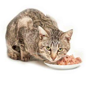 Υγρές τροφές Γάτας