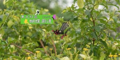 東光蝴蝶廊道 |5月必看南投景點兩大生態之美,華麗的蝴蝶、閃爍螢火蟲~ 1