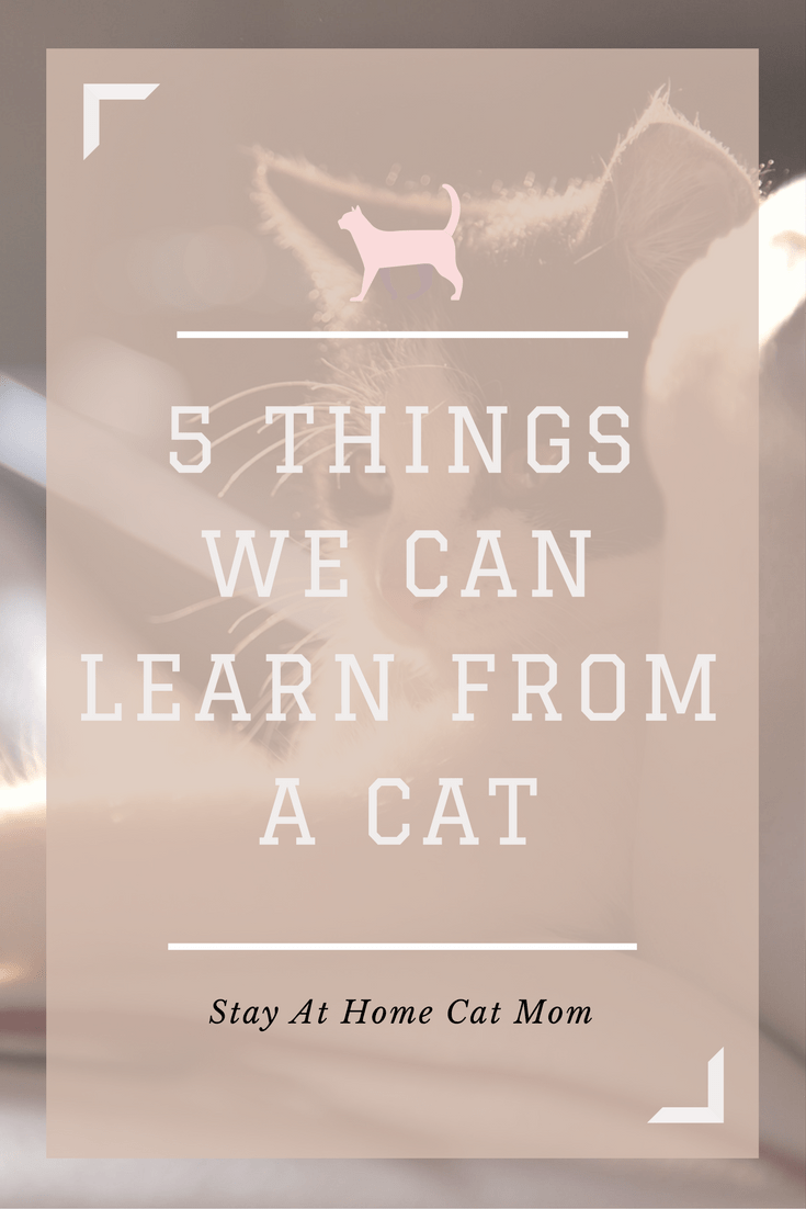 5 things we can learn from a cat - From StayAtHomeCatMom