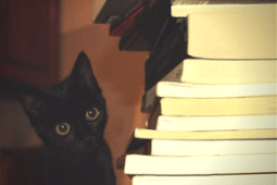 catwithbookpile