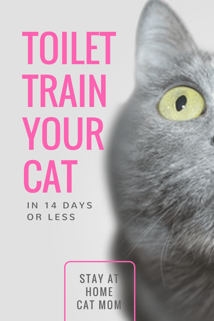 Toilet train your cat in 14 days or less!