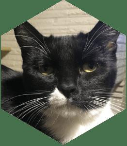 Our feline children - Little Kitty