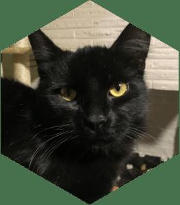 Our feline children - Loomy