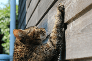 Keeping your cat entertained: An indoor cat survival guide