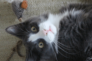 An indoor cat mom survival guide