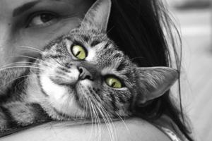 An indoor cat survival guide!